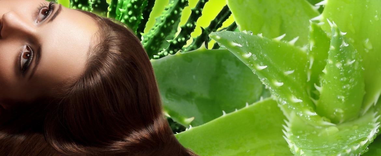 aloe vera bienfaits pour les cheveux adjocom. Black Bedroom Furniture Sets. Home Design Ideas
